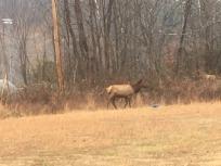 15.1481735401.local-elk