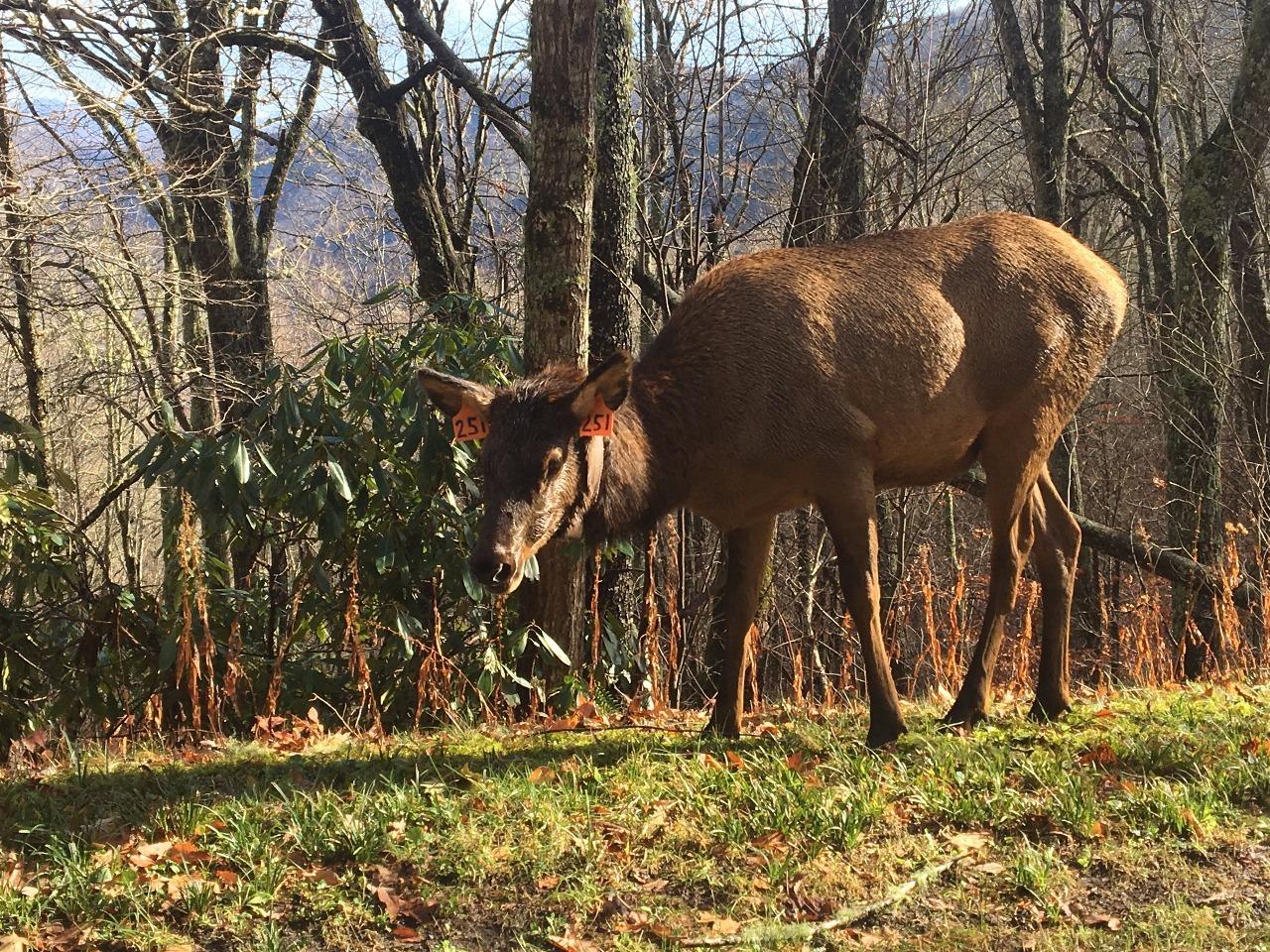 15.1484319329.our-elk-friend