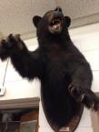 1.1453124789.goodbye-mr-bear